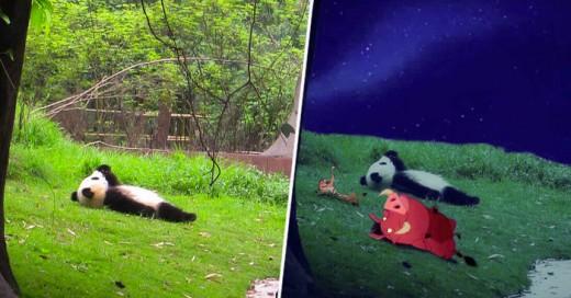 Una batalla más de Reddit ahora el protagonista: Un panda mirando al cielo