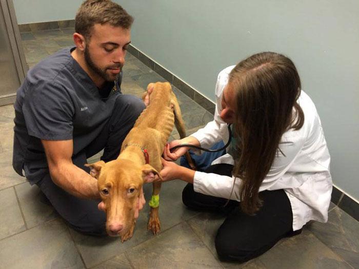 Dos personas atendiendo a una pequeña perrita desnutrida en una fundación animal