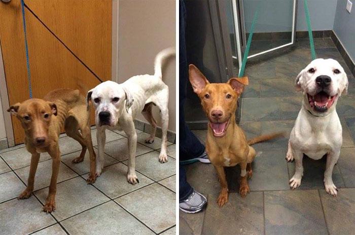 Fotografía en dos partes de la transformación de dos perros encontrados en un edificio abandonado