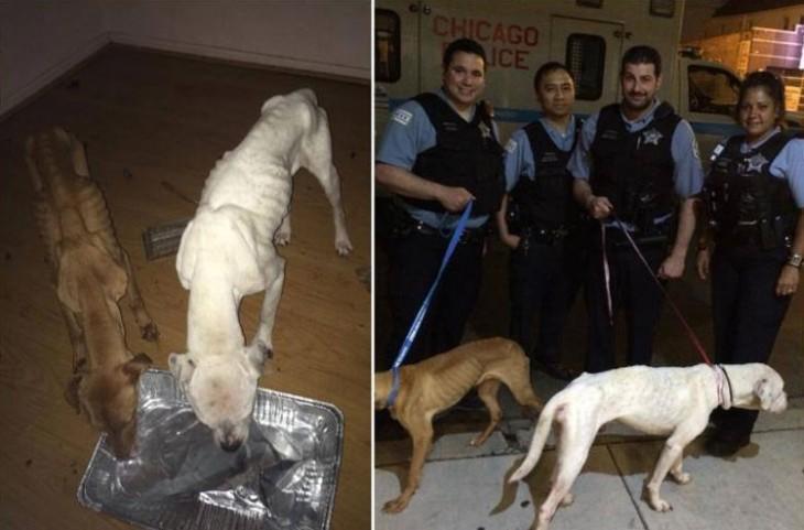 Dos perros fueron rescatados por el departamento de policía en Chicago