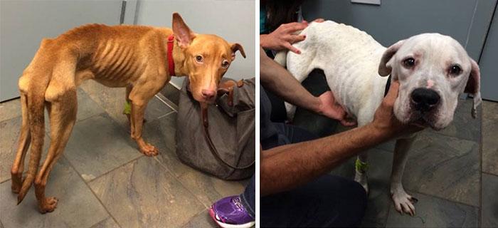 Fotografía de dos perros rescatados en desnutrición