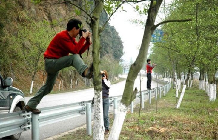 fotógrafo arriba entre un árbol y una cerca cerca de la carretera