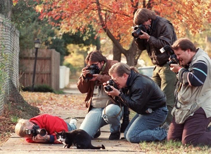 Fotógrafos alrededor de un gato intentando tomarle una fotografía