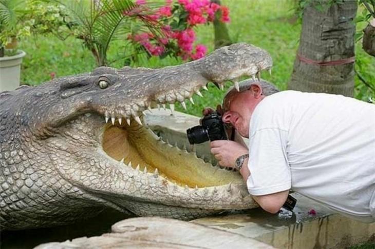 hombre tomando una fotografía adentro del hocico de un cocodrilo