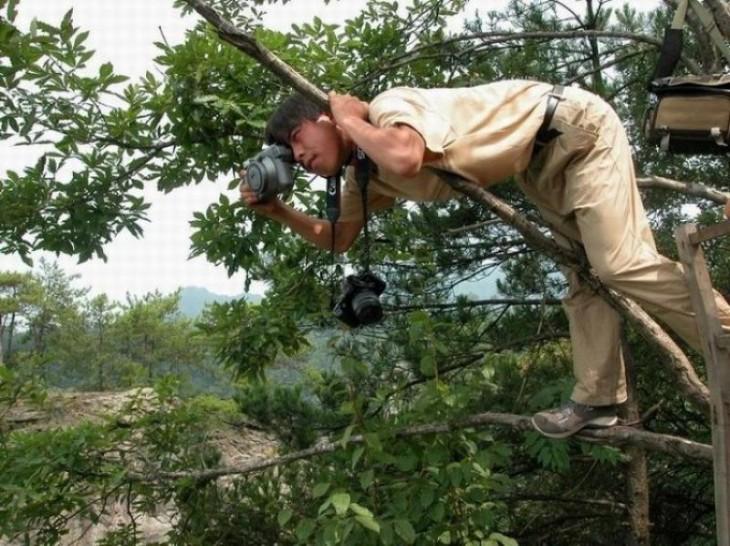 Fotógrafo sobre un árbol intentando tomar una foto