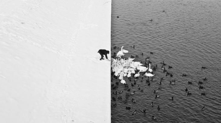 Fotografía de un hombre dando de comer a unos cisnes en Cracovia Grunwald Bridge
