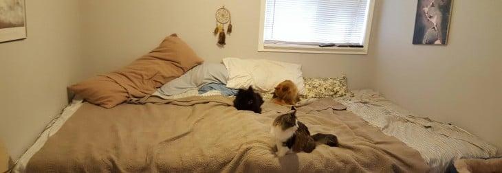 Pareja construye cama gigante para dormir con sus 7 mascotas