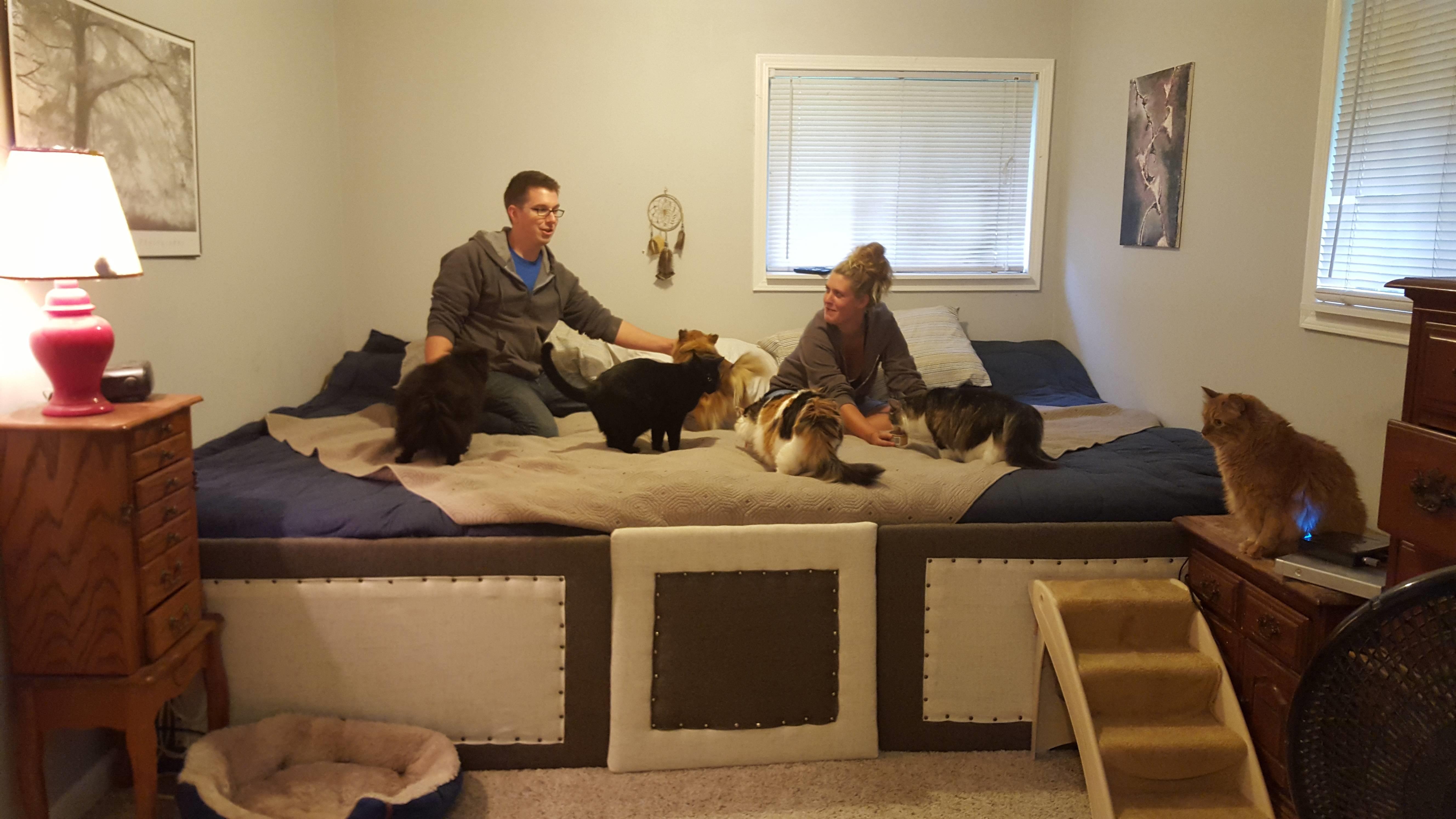 Pareja crea cama gigante para poder dormir con sus mascotas - Escaleras para perros pequenos ...