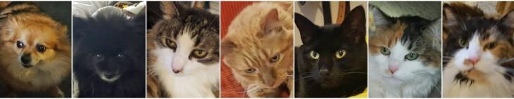 aqui se ven las 7 mascotas con las que esta parejade jovenes conviven