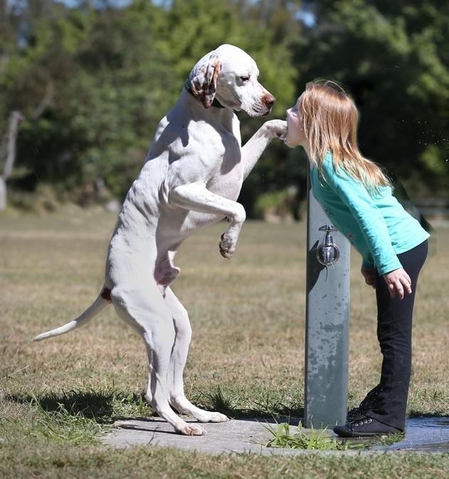 niña abriendo la boca para que el perro le meta la pata