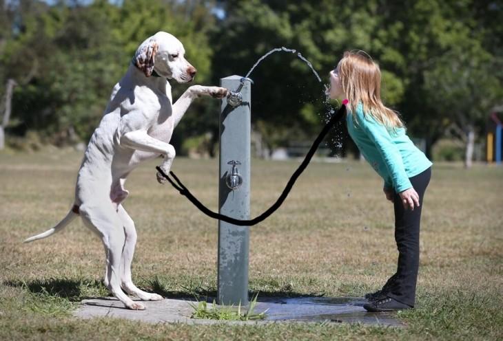 perro con la correa para su perro