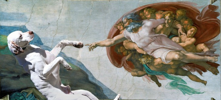 PERRO EN PHOTOSHOP DE LA CREACIÓN