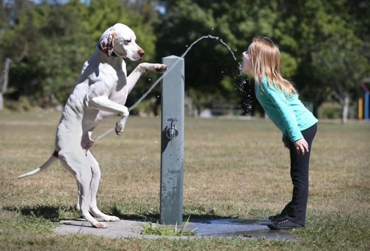 perro dándole pipí a la niña para tomar