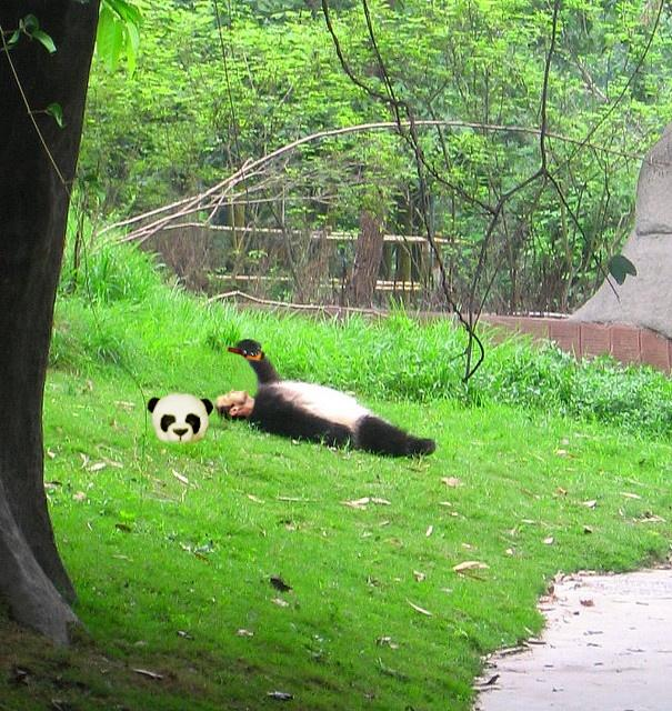mascara de oso panda simmulando ser una botarga