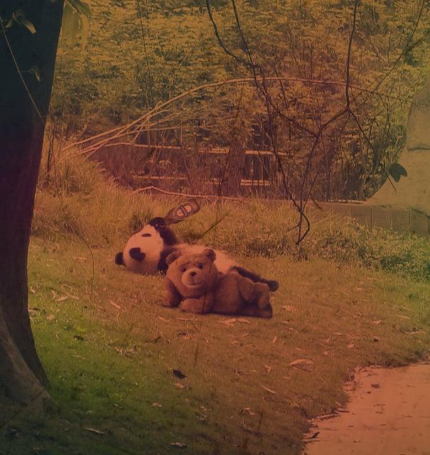 pandita con el oso ted