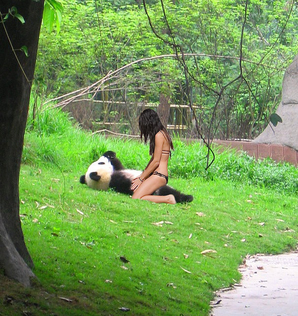 pandita con mrs robinson arriba