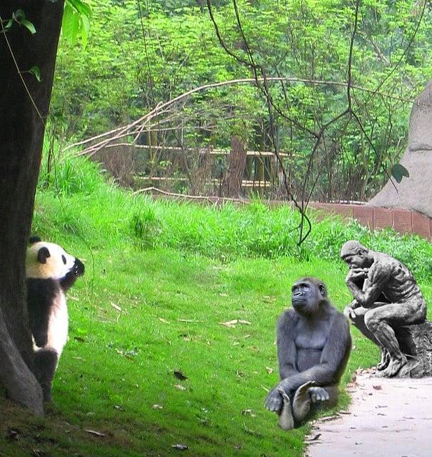 chango, panda y el pensador pensando en el parque