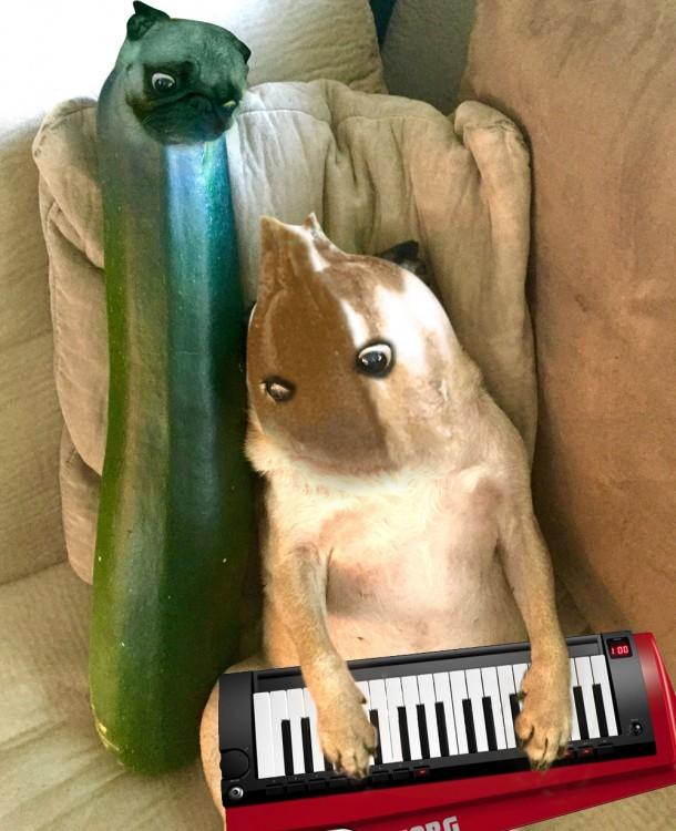 perro pug de musico