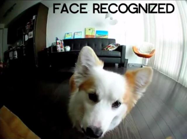 Selfie de un perro por medio de la cámara PetBot