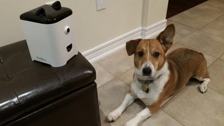 Perro acostado en el piso a un costado de una cámara PetBot