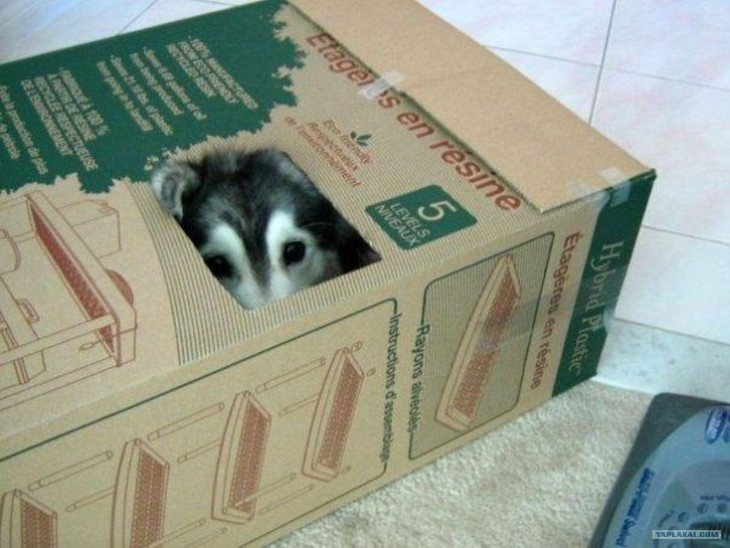 La perra que es gato