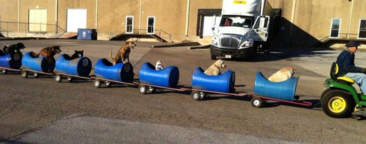 Tren de remolques para perros