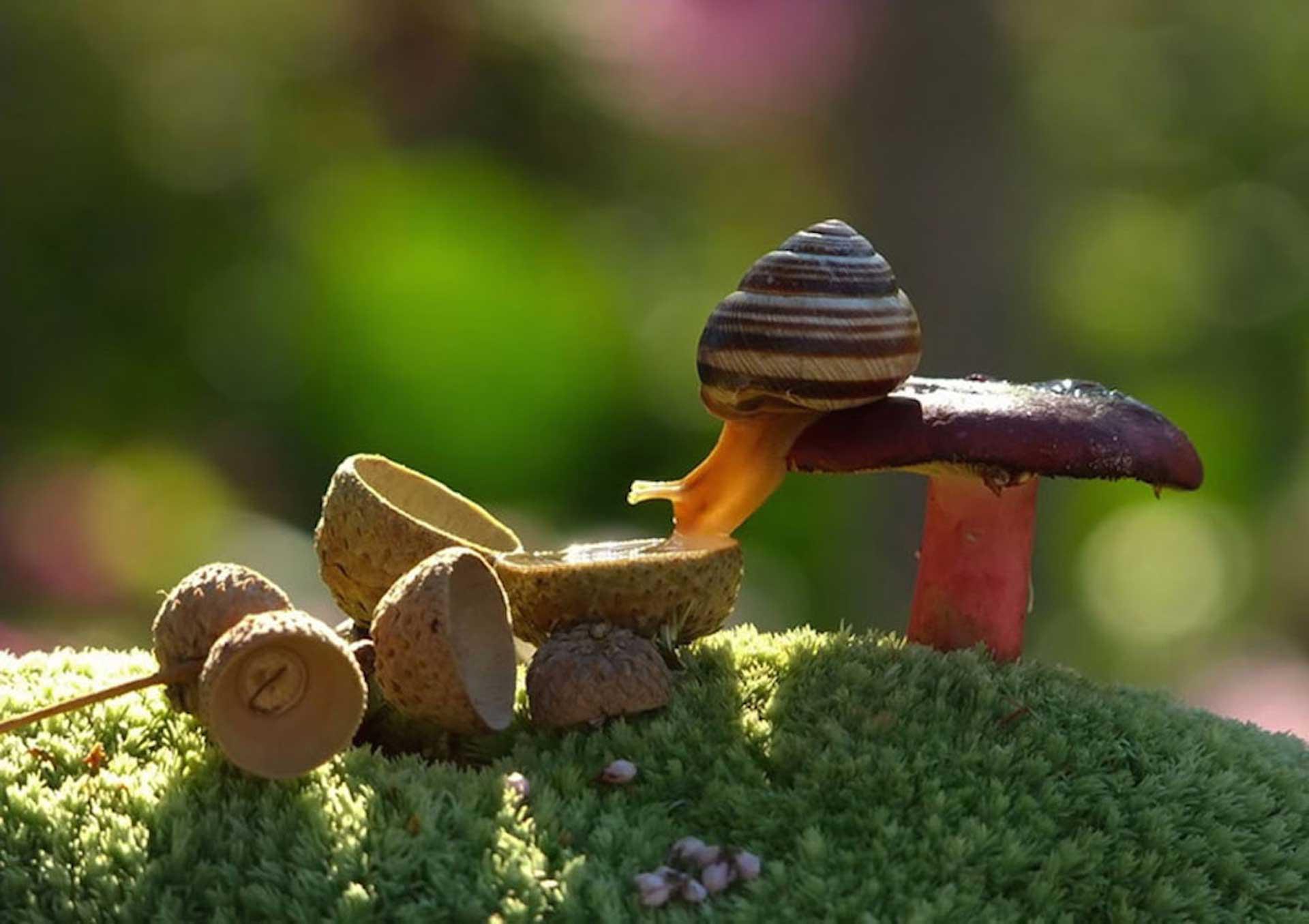 Este es el mundo m gico de los caracoles seg n mishcenko for Caracol de jardin que come