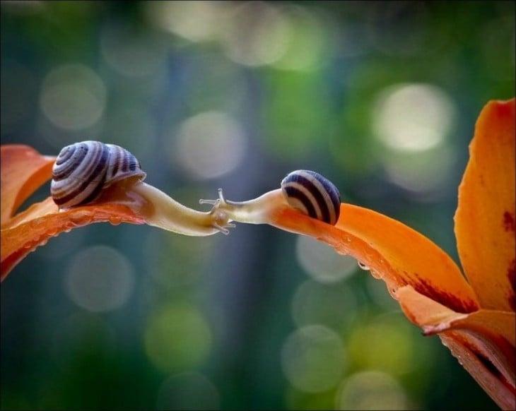 caracoles besandose desde una flor