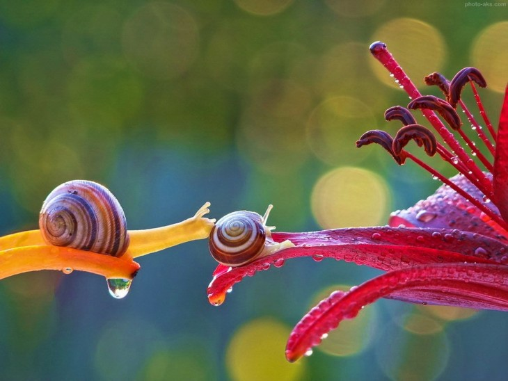 los caracoles son hermafróditas y pueden llegar a vivir hasta 7 años