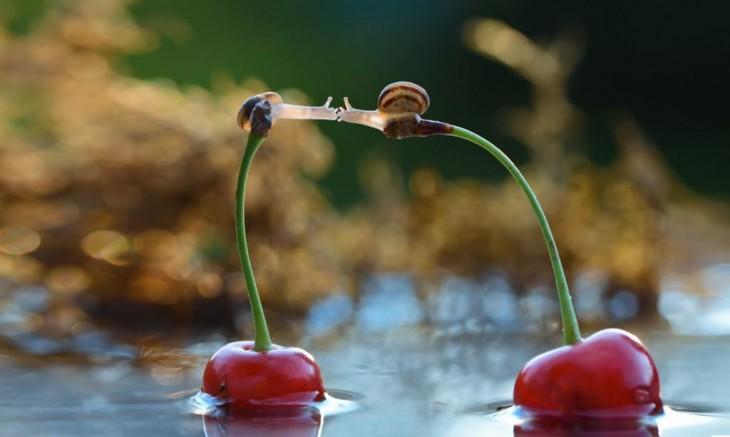 caracoles besandose desde unas cerezas que parecen guardar equilibrio unas con otras
