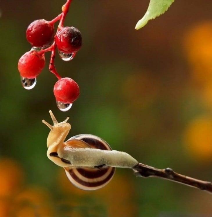 caracoles colgados de plantas rojas