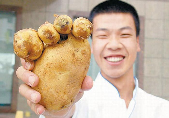 uma pessoa com uma batata em forma de pé em sua mão