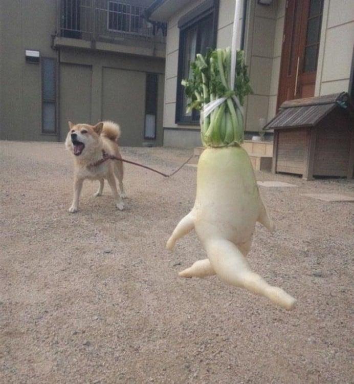 Quintal de uma casa com um cachorro latindo e um rabanete que parece estar a correr