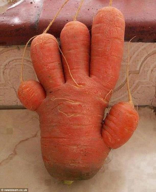 Zanahoria en forma de mano