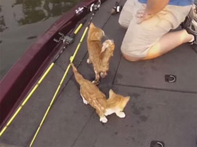 gatitos agradecidos por ser rescatados