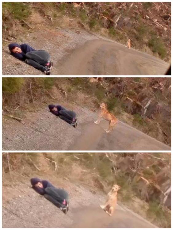 Imágenes que muestran a una chica acostada en el suelo en posición fetal a la orilla de una carretera