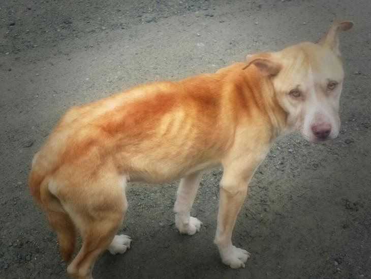 fotografía de un perro desnutrido a la orilla de una carretera