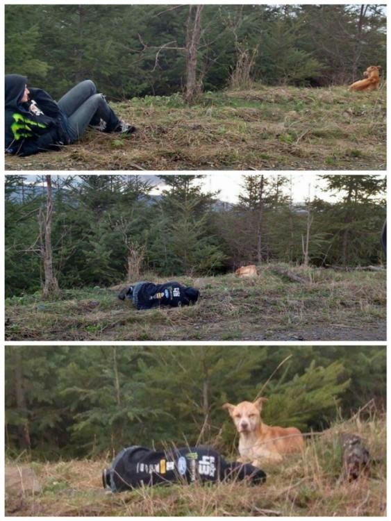 imágenes donde el perro se va acercando poco a poco a una chica tirada en el suelo