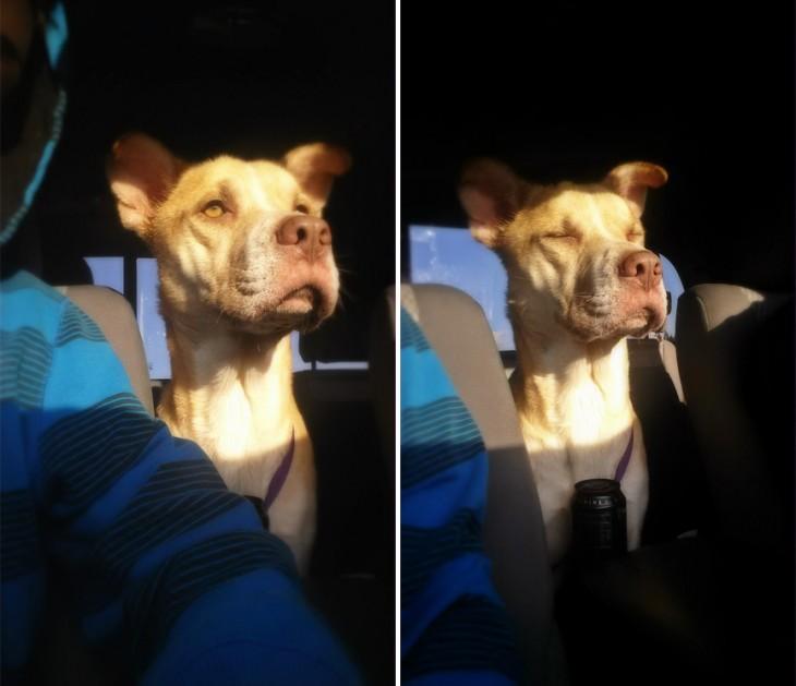 imágenes de un perro rescatado arriba de un coche