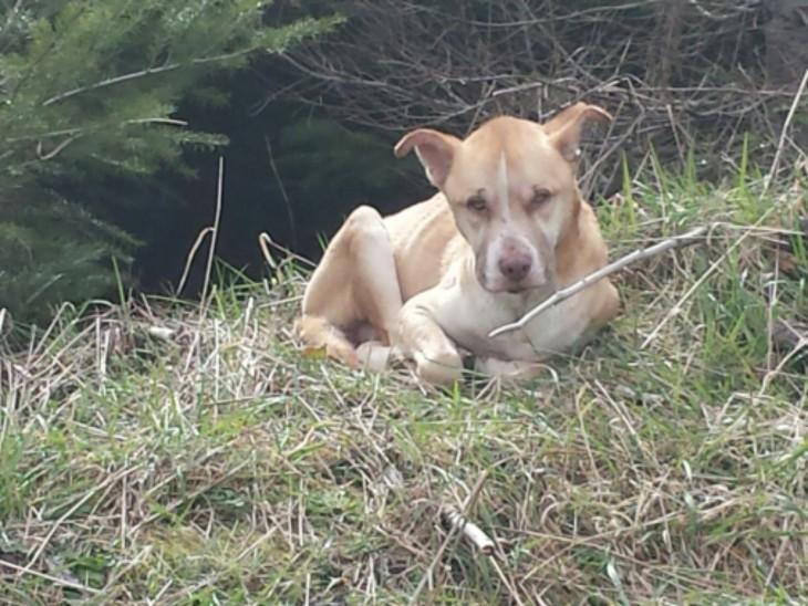 fotografía de un perro acostado en la hierba a un costado de una carretera en Estados Unidos