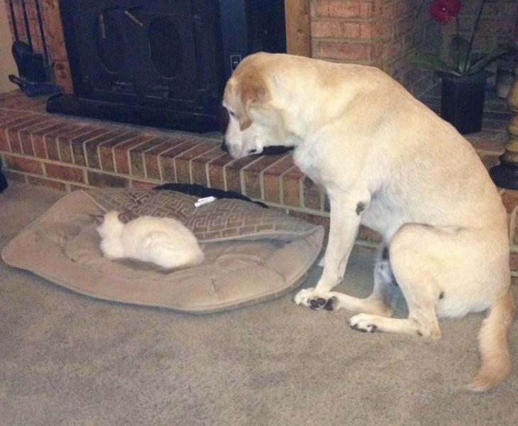 perro esperando a su amigo gato a que se quite
