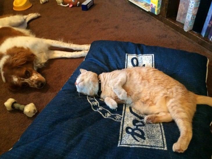 CAT diminui CAMA E CÃO DO CÃO fica triste