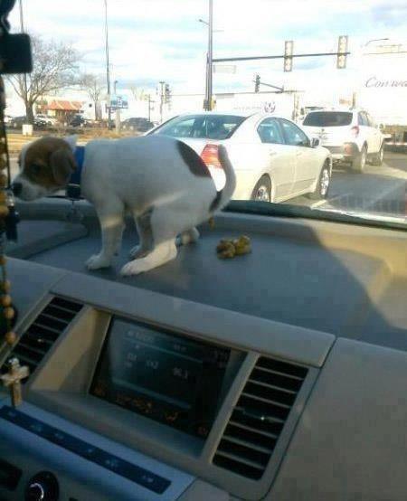 perro que se hizo popo en la parte de arriba del carro
