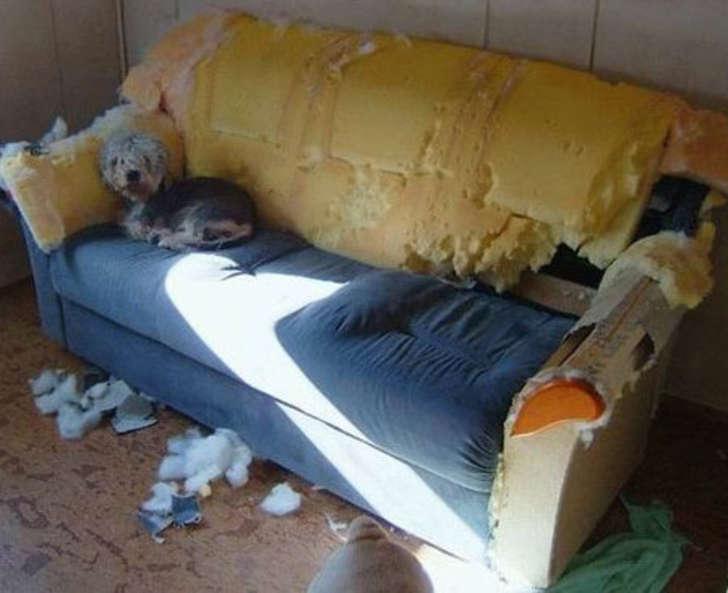 perro destruye el sillón de sus dueños