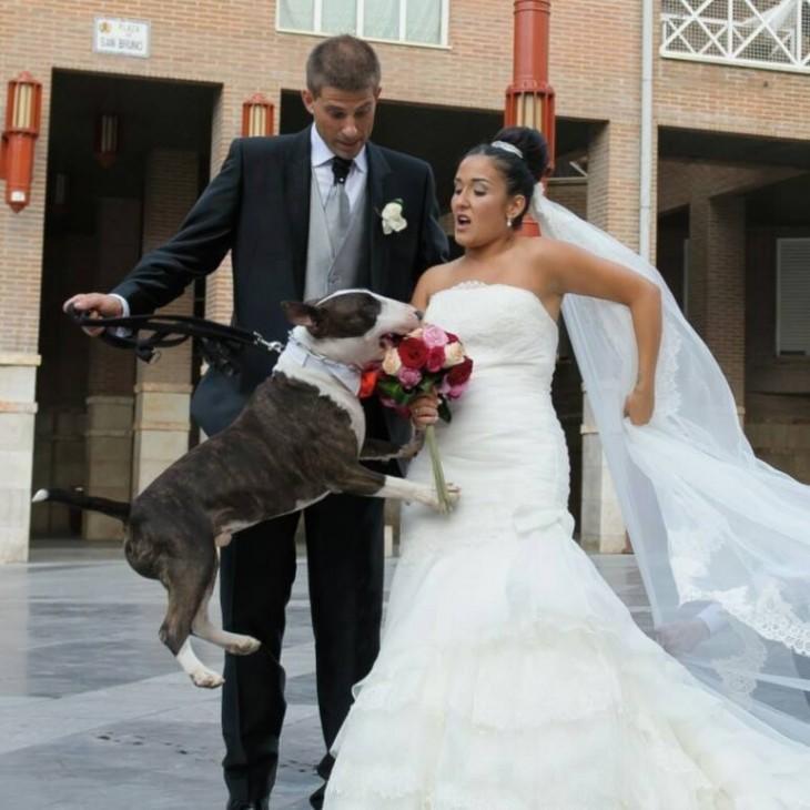 perro le quita el ramo a la novia