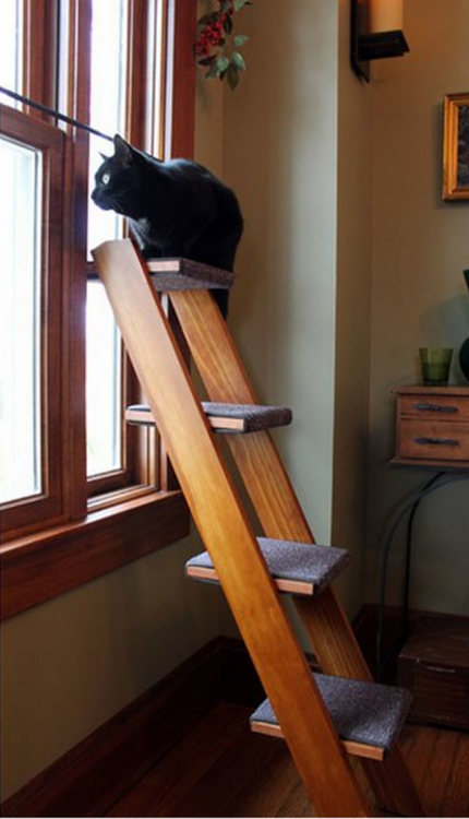 Vieje LADDER ao lado da janela TO seu gato pode subir a uma simples notas feitas no estrangeiro
