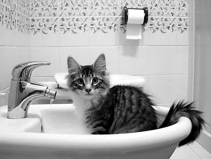 BANHA Gato em um dissipador