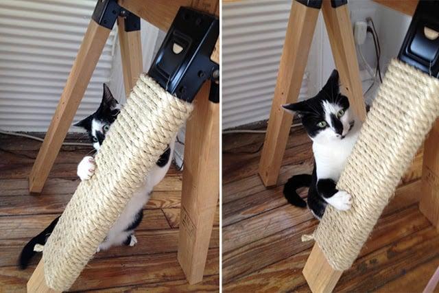 perna mobiliário envolvido com gato corda