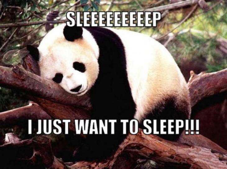 pandita diciendo que todo lo quequiere es dormir