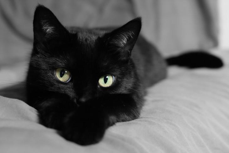 gato negro despierto durante la noche